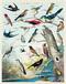 Audubon Birds Vintage Puzzle image 3